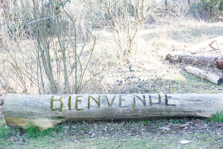 balade en foret pessac merignac bordeaux parc du bourgailh modaliza blog