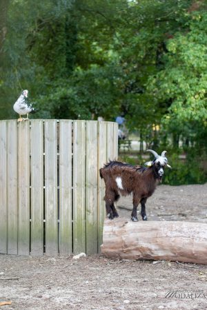 photographe-parcs-gradignan-mini-zoo-animaux-bordeaux-gironde-by-modaliza-photographe-8