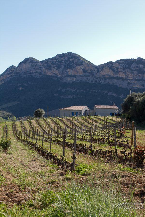 photo corse corsica vignes vin voyage méditerannée paysage by modaliza photographe 1017-142