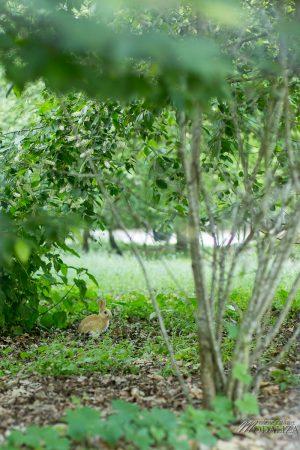 que faire a bordeaux avec les enfants parc bordelais maman blogueuse by modaliza photographe-3868