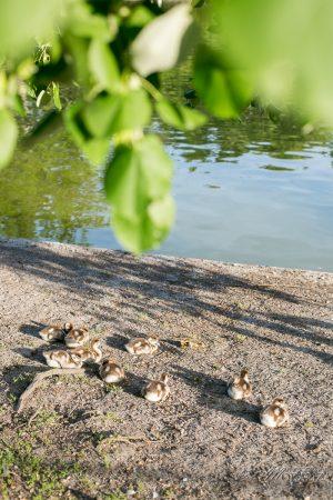 que faire a bordeaux avec les enfants parc bordelais maman blogueuse by modaliza photographe-3903