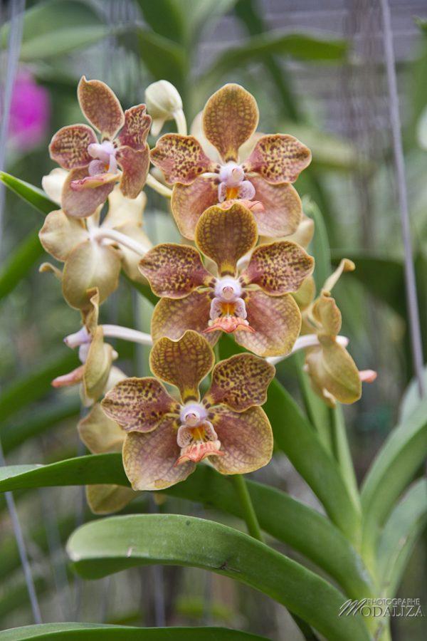 photo thailande chiang mai ferme orchidée papillons by modaliza photographe-6817