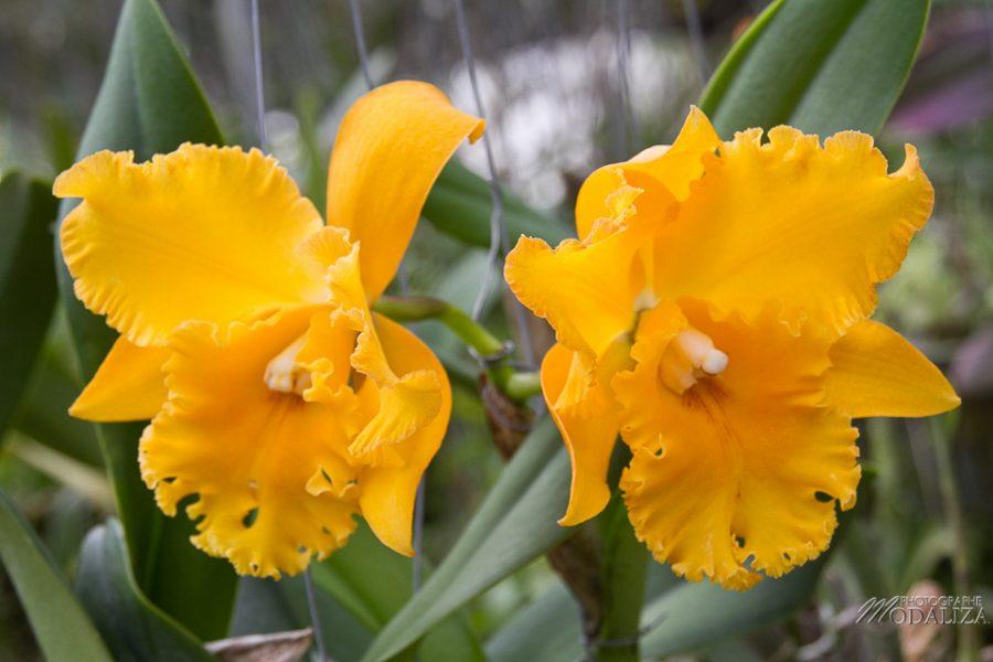photo thailande chiang mai ferme orchidée papillons by modaliza photographe-6825