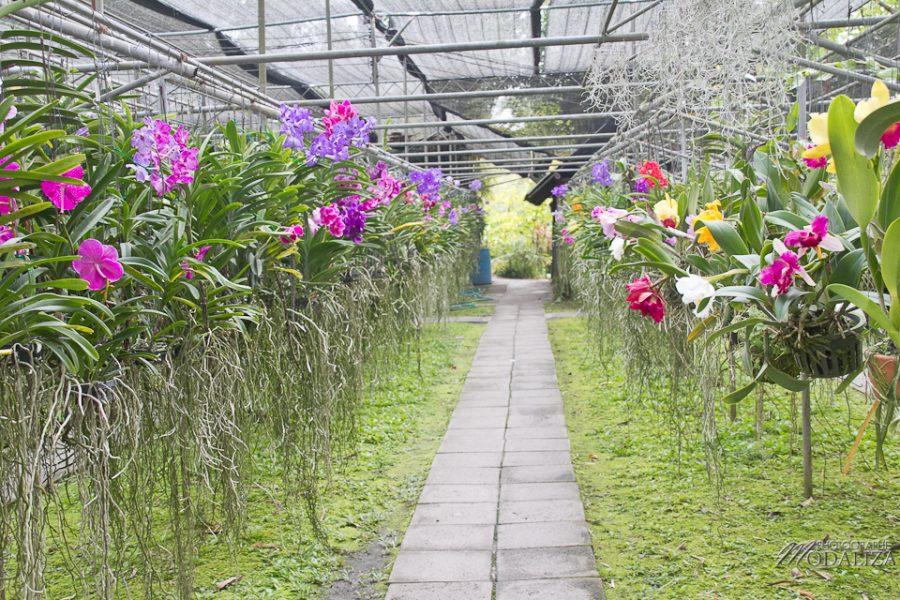 photo thailande chiang mai ferme orchidée papillons by modaliza photographe-6827