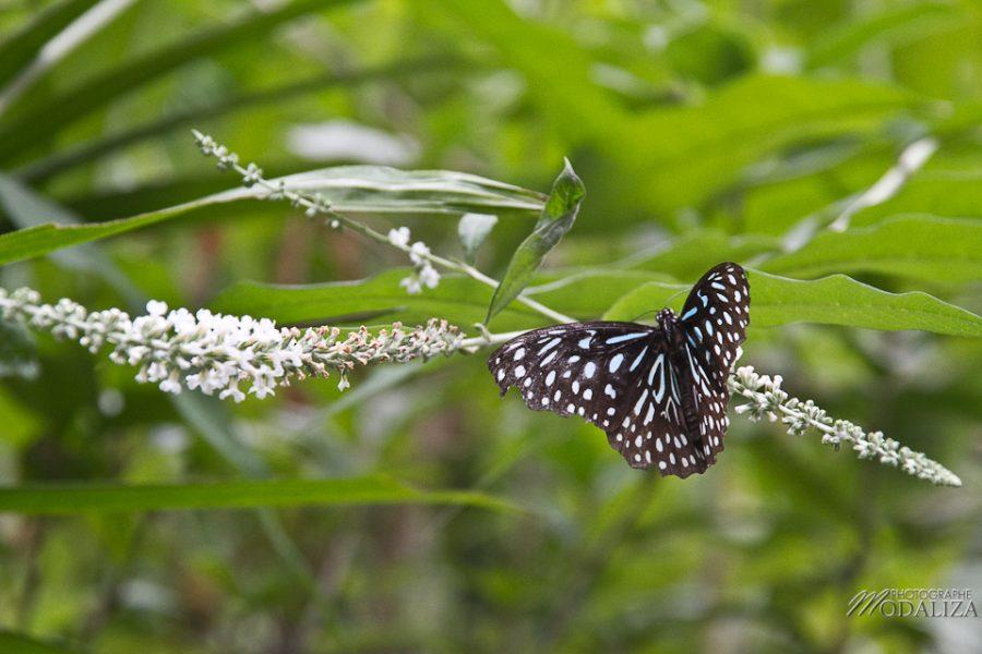 photo thailande chiang mai ferme orchidée papillons by modaliza photographe-6860