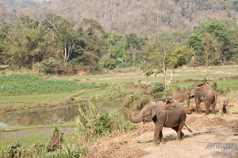 photo thailande chiang mai track elephants rizieres by modaliza photographe-6385