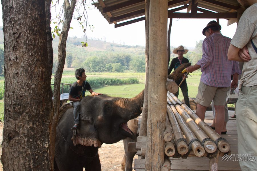photo thailande chiang mai track elephants rizieres by modaliza photographe-6398