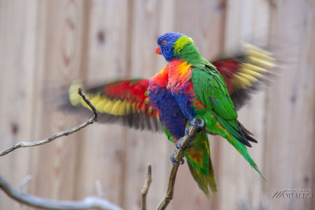 photo animaux sortie famille bordeaux maman blogueuse zoo pessac by modaliza photographe-4935