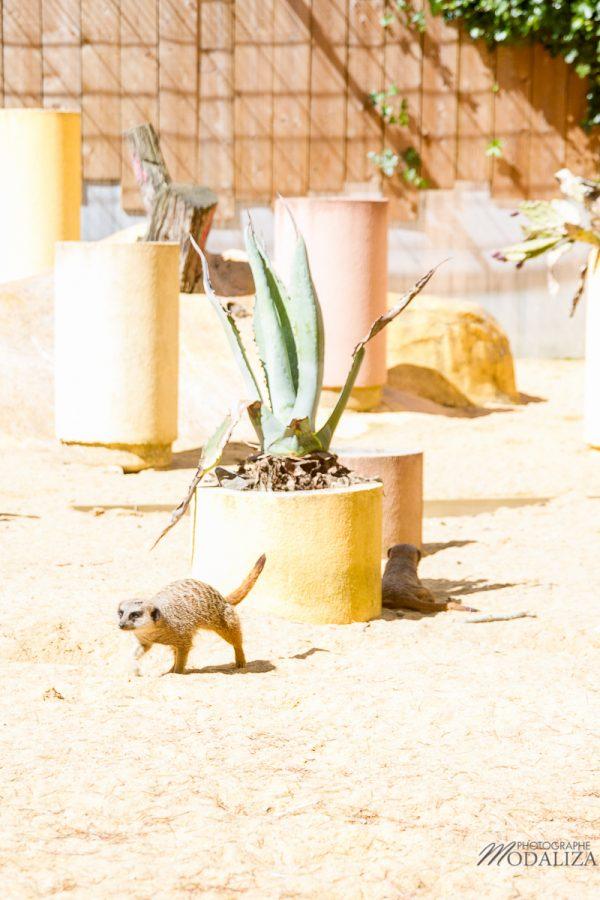 photo animaux sortie famille bordeaux maman blogueuse zoo pessac by modaliza photographe-5068