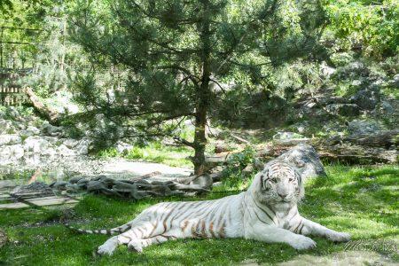 photo animaux sortie famille zoo aquitaine maman blogueuse zoo pessac by modaliza photographe-5069