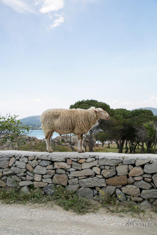 paros travel blog guide voyage grece cyclades avec enfant 4 jours sejour by modaliza photographe-3478
