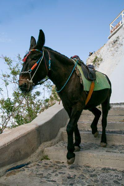 santorin travel blog guide voyage fira grece avec enfant weekend court sejour by modaliza photographe-3324